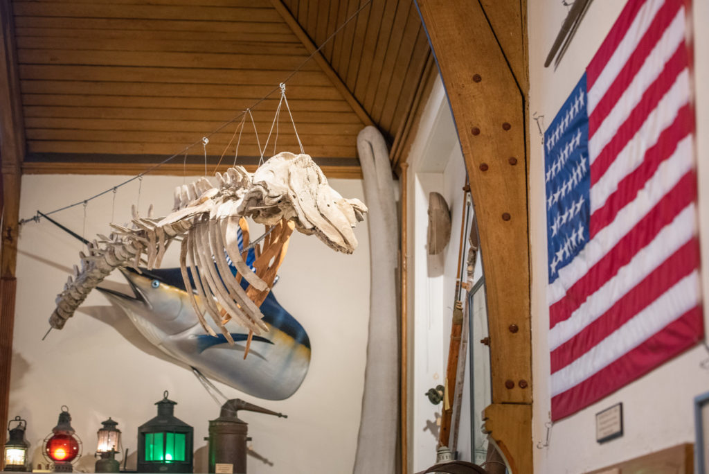whale skeleton hanging from ceiling in museum