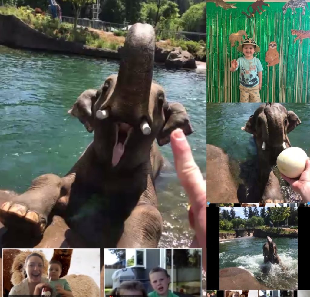 virtual birthday party elephant encounter at the zoo
