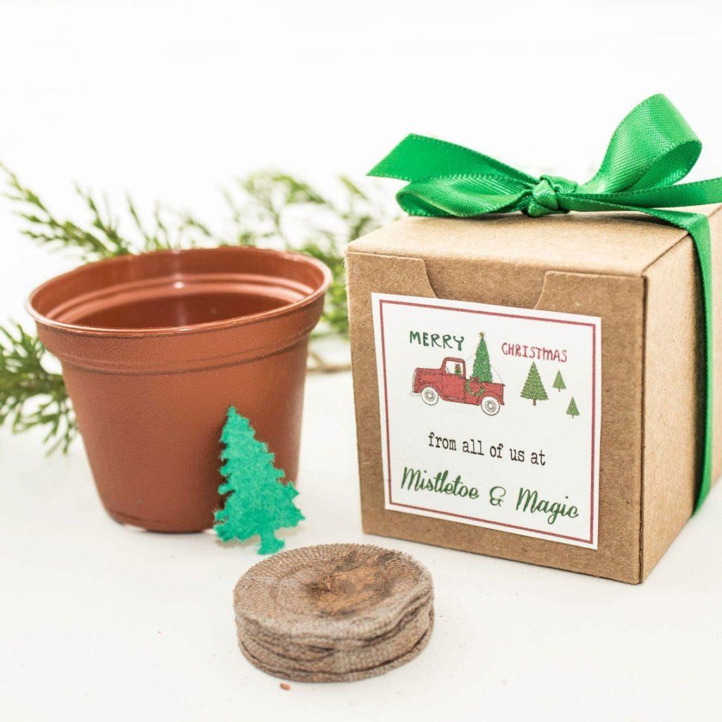 Christmas tree grow kit party favor